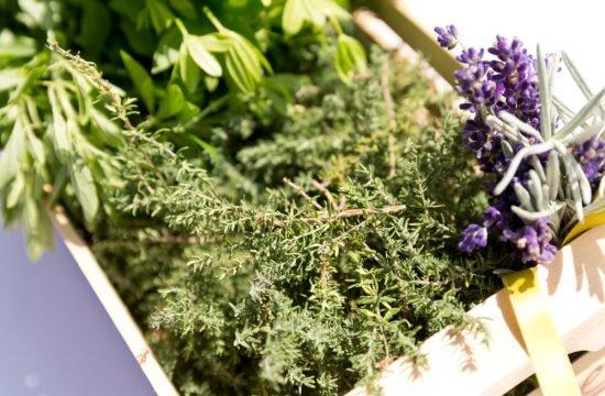 Erbe aromatiche dell'orto